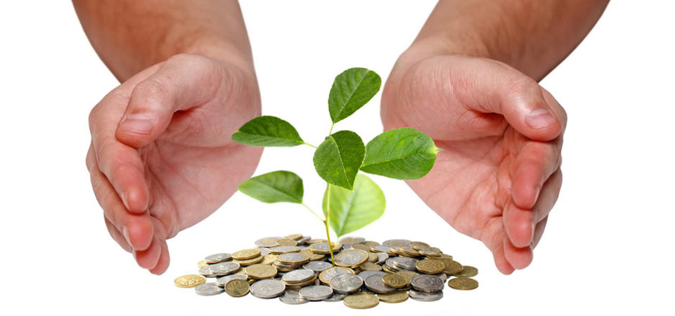 Financial-Investment-Advice-Newcastle-Plant-and-Sow